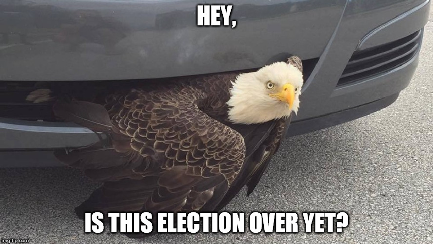 Bald Eagle in Car Grille | HEY, IS THIS ELECTION OVER YET? | image tagged in bald eagle,car,bird,hit | made w/ Imgflip meme maker