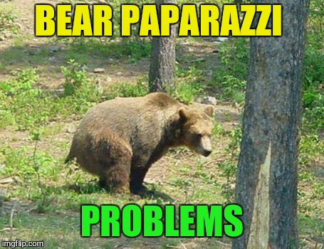BEAR PAPARAZZI PROBLEMS | made w/ Imgflip meme maker