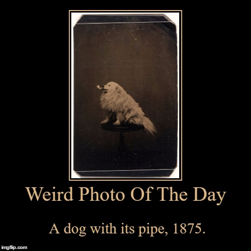 This Dog Is Bad@ss! | Weird Photo Of The Day | A dog with its pipe, 1875. | image tagged in funny,demotivationals,weird,photo of the day,dogs,pipe | made w/ Imgflip demotivational maker
