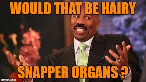 Steve Harvey Meme | WOULD THAT BE HAIRY SNAPPER ORGANS ? | image tagged in memes,steve harvey | made w/ Imgflip meme maker