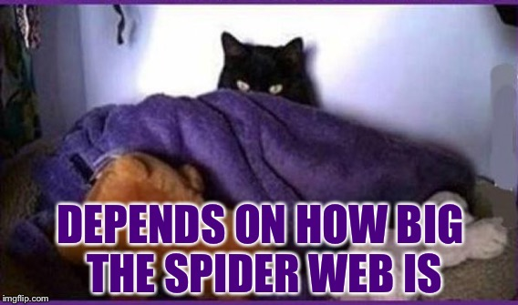DEPENDS ON HOW BIG THE SPIDER WEB IS | made w/ Imgflip meme maker
