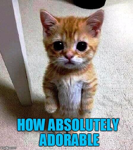 HOW ABSOLUTELY ADORABLE | image tagged in kitty | made w/ Imgflip meme maker