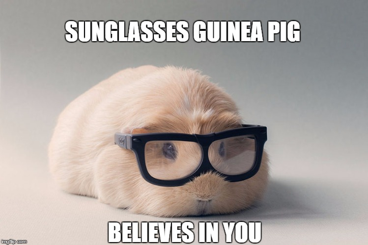 Guinea Pig Believes |  SUNGLASSES GUINEA PIG; BELIEVES IN YOU | image tagged in guinea pig | made w/ Imgflip meme maker