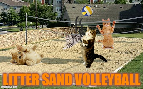 LITTER SAND VOLLEYBALL | made w/ Imgflip meme maker