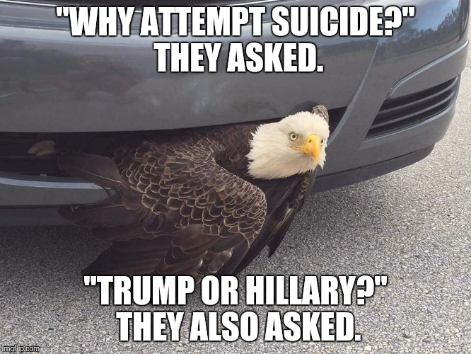 1c4okx image tagged in trump or hillary,memes,bald eagle,suicide imgflip