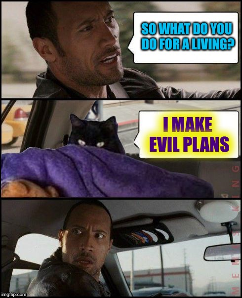 The Rock Driving Evil Cat | SO WHAT DO YOU DO FOR A LIVING? I MAKE EVIL PLANS | image tagged in the rock driving evil cat,memes | made w/ Imgflip meme maker