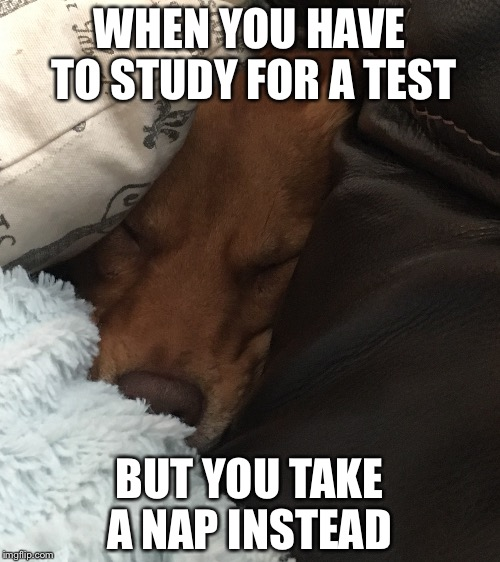 Test dogger  | WHEN YOU HAVE TO STUDY FOR A TEST BUT YOU TAKE A NAP INSTEAD | image tagged in tiered dogger,memes,funny,relatable | made w/ Imgflip meme maker
