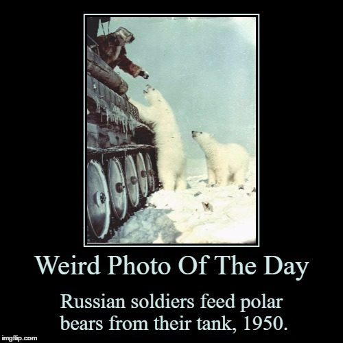 I Only See One Russian Soldier Though... | Weird Photo Of The Day | Russian soldiers feed polar bears from their tank, 1950. | image tagged in funny,demotivationals,weird,photo of the day,russian soldier,polar bears | made w/ Imgflip demotivational maker