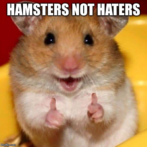 Thumbs up hamster  | HAMSTERS NOT HATERS | image tagged in thumbs up hamster | made w/ Imgflip meme maker