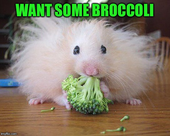WANT SOME BROCCOLI | made w/ Imgflip meme maker