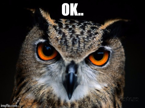 Owl Gives No Fucks | OK.. | image tagged in owl gives no fucks,memes,i don't give a fuck,animal memes,owl,okay | made w/ Imgflip meme maker
