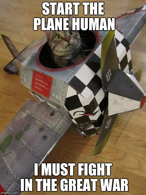 airplane cat | START THE PLANE HUMAN I MUST FIGHT IN THE GREAT WAR | image tagged in airplane cat | made w/ Imgflip meme maker