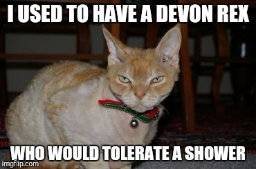 I USED TO HAVE A DEVON REX WHO WOULD TOLERATE A SHOWER | made w/ Imgflip meme maker