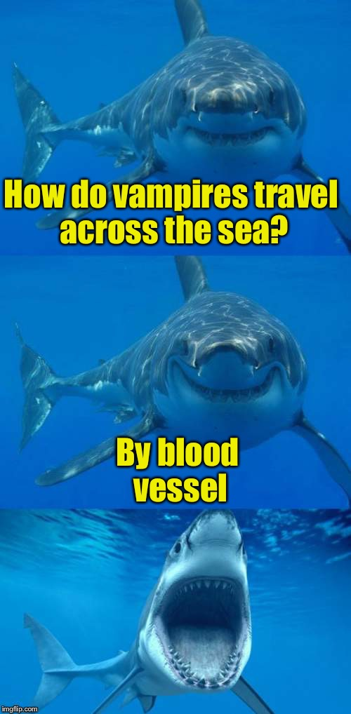 Bad Shark Pun  | How do vampires travel across the sea? By blood vessel | image tagged in bad shark pun | made w/ Imgflip meme maker