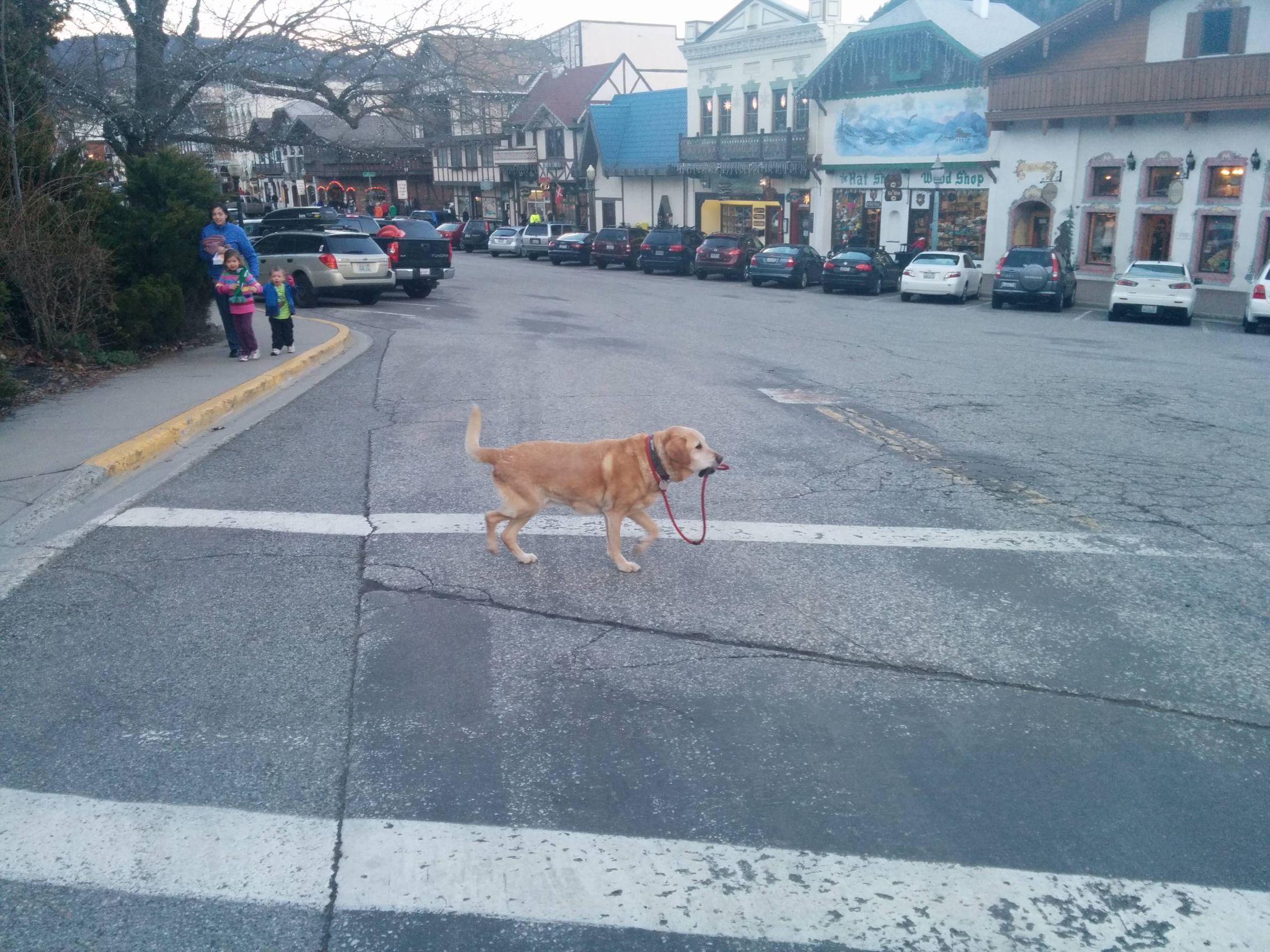 1cbilw dog walking itself blank template imgflip