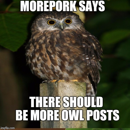 Owl Posts |  MOREPORK SAYS; THERE SHOULD BE MORE OWL POSTS | image tagged in new zealand,birds | made w/ Imgflip meme maker
