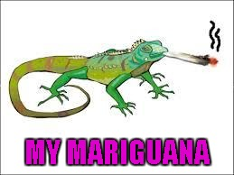 MY MARIGUANA | made w/ Imgflip meme maker
