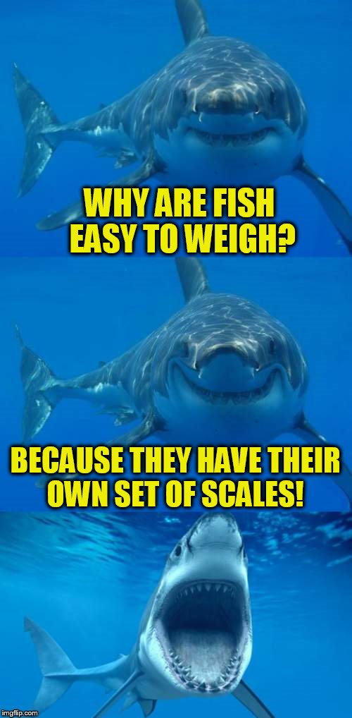 Bad Shark Pun  | WHY ARE FISH EASY TO WEIGH? BECAUSE THEY HAVE THEIR OWN SET OF SCALES! | image tagged in bad shark pun,fish,scales,jokes,funny meme,weight | made w/ Imgflip meme maker