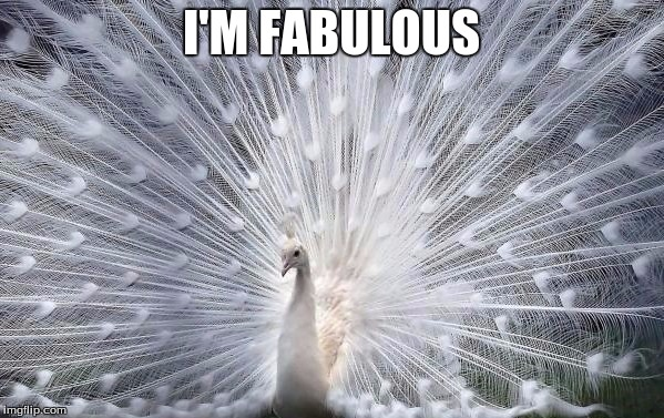 I'M FABULOUS | made w/ Imgflip meme maker