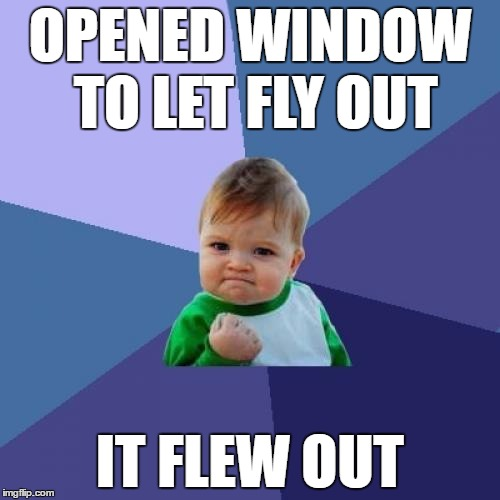 Success Kid Meme | OPENED WINDOW TO LET FLY OUT IT FLEW OUT | image tagged in memes,success kid | made w/ Imgflip meme maker