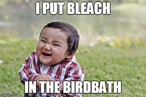 Evil Toddler Meme | I PUT BLEACH IN THE BIRDBATH | image tagged in memes,evil toddler | made w/ Imgflip meme maker