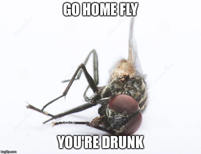 French fly | GO HOME FLY YOU'RE DRUNK | image tagged in french fly | made w/ Imgflip meme maker