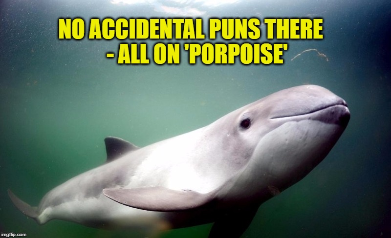 NO ACCIDENTAL PUNS THERE    - ALL ON 'PORPOISE' | made w/ Imgflip meme maker