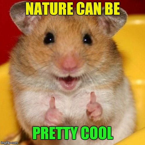 Two Thumbs Up | NATURE CAN BE PRETTY COOL | image tagged in two thumbs up | made w/ Imgflip meme maker