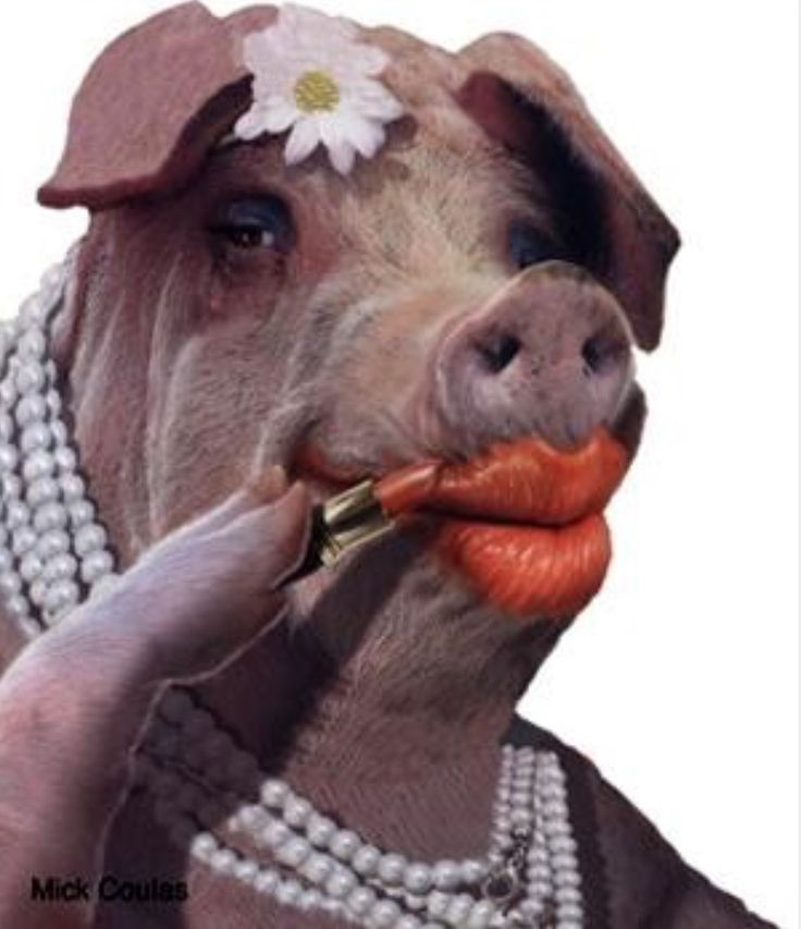 Image result for lipstick on a pig gif