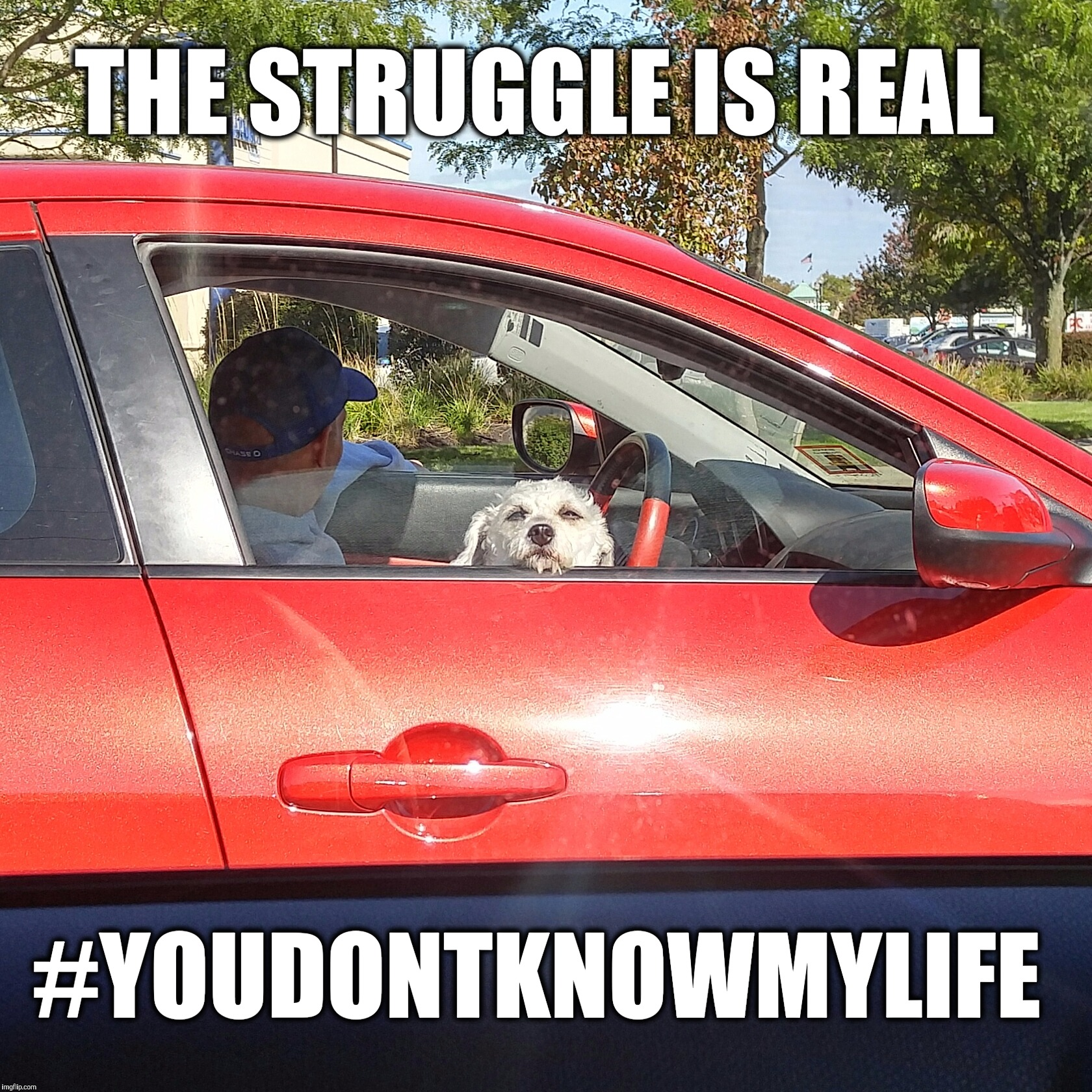 Funny Memes About Life Struggles : The struggle is real imgflip