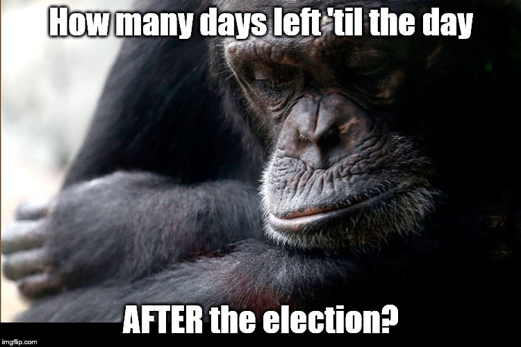 As you can see, the suspense is killing me. The Chinese are setting up house in the Spratlys, Syria's burning, no one cares.   | How many days left 'til the day AFTER the election? | image tagged in koko,election,politics,china,war | made w/ Imgflip meme maker