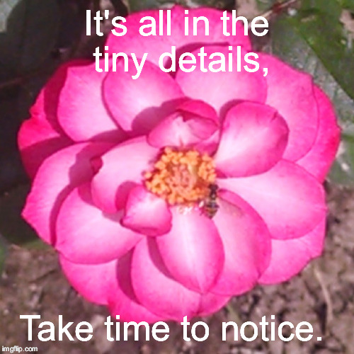 Notice the details  | It's all in the tiny details, Take time to notice. | image tagged in positive thinking,beautiful,flowers,memes,bees | made w/ Imgflip meme maker