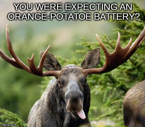 mainiac moose | YOU WERE EXPECTING AN ORANGE-POTATOE BATTERY? | image tagged in mainiac moose | made w/ Imgflip meme maker