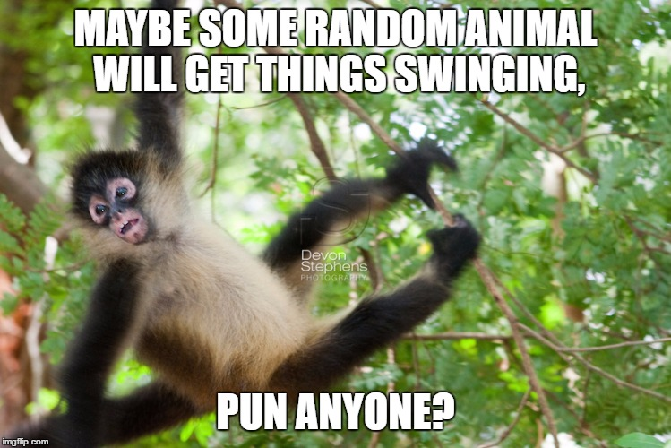 MAYBE SOME RANDOM ANIMAL WILL GET THINGS SWINGING, PUN ANYONE? | made w/ Imgflip meme maker