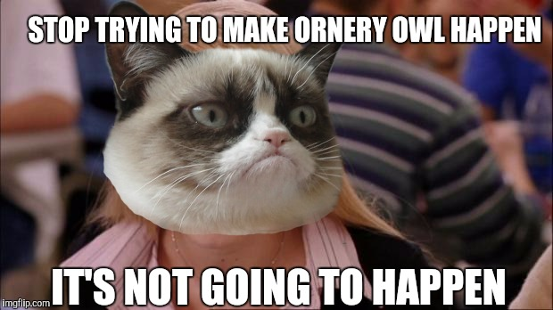 STOP TRYING TO MAKE ORNERY OWL HAPPEN IT'S NOT GOING TO HAPPEN | made w/ Imgflip meme maker