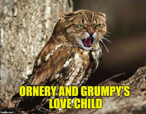 ORNERY AND GRUMPY'S LOVE CHILD | made w/ Imgflip meme maker