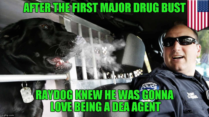 I don't particularly love my job, but it is easy and pays the bills...how about you folks...do you love your jobs? | AFTER THE FIRST MAJOR DRUG BUST RAYDOG KNEW HE WAS GONNA LOVE BEING A DEA AGENT | image tagged in new dea agent,memes,funny,raydog,dea | made w/ Imgflip meme maker