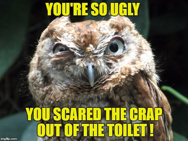 YOU'RE SO UGLY YOU SCARED THE CRAP OUT OF THE TOILET ! | image tagged in ornery owl,memes,ugly,owl,toilet,restroom | made w/ Imgflip meme maker