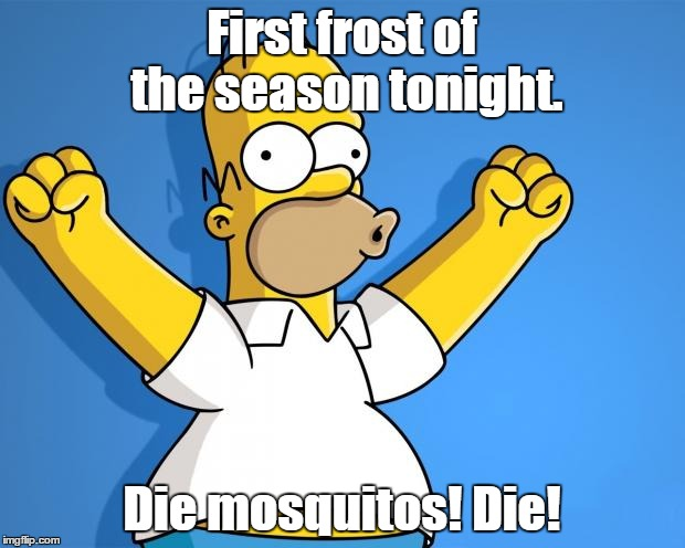Woohoo Homer Simpson | First frost of the season tonight. Die mosquitos! Die! | image tagged in woohoo homer simpson | made w/ Imgflip meme maker