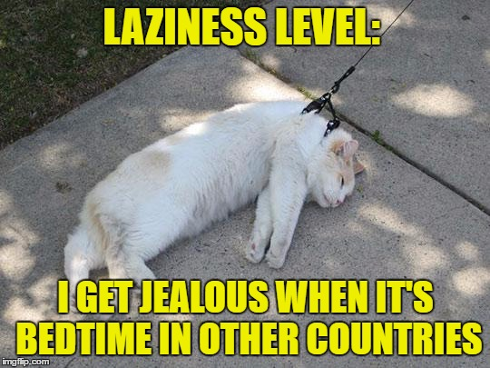 Funny Cat Meme Generator : Lazy and jealous imgflip