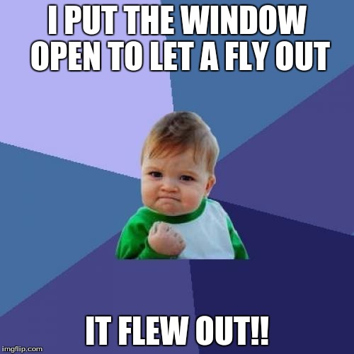 Success Kid Meme | I PUT THE WINDOW OPEN TO LET A FLY OUT IT FLEW OUT!! | image tagged in memes,success kid | made w/ Imgflip meme maker