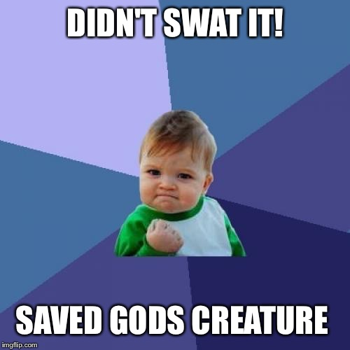 Success Kid Meme | DIDN'T SWAT IT! SAVED GODS CREATURE | image tagged in memes,success kid | made w/ Imgflip meme maker