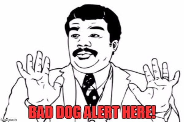 BAD DOG ALERT HERE! | made w/ Imgflip meme maker