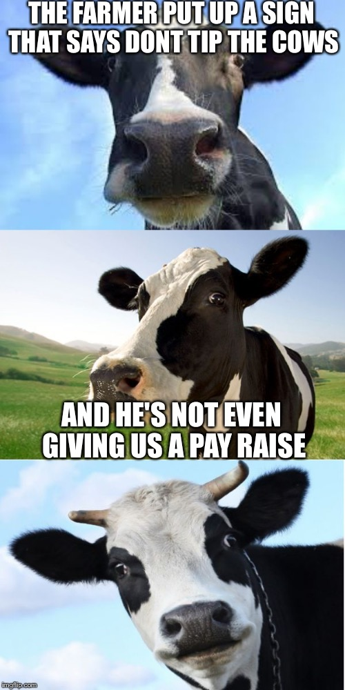 Bad Pun Cow | THE FARMER PUT UP A SIGN THAT SAYS DONT TIP THE COWS AND HE'S NOT EVEN GIVING US A PAY RAISE | image tagged in bad pun cow,memes | made w/ Imgflip meme maker