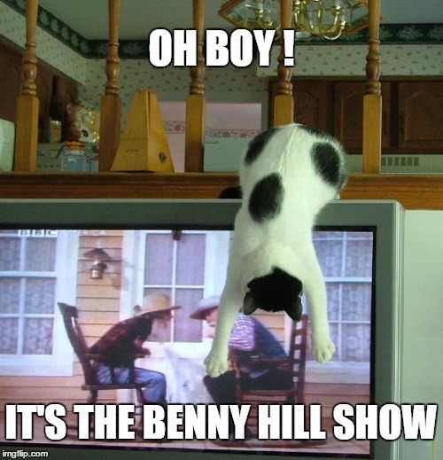 Actually is my cat :-) | OH BOY ! IT'S THE BENNY HILL SHOW | image tagged in tv cat,memes,cat,upside-down,benny hill | made w/ Imgflip meme maker