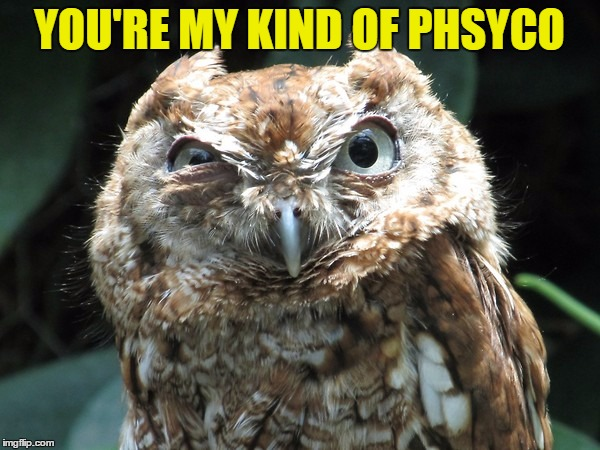 YOU'RE MY KIND OF PHSYCO | image tagged in ornery owl | made w/ Imgflip meme maker