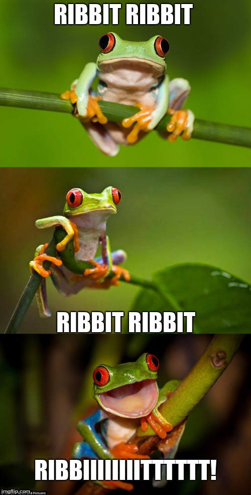 Frog Puns | RIBBIT RIBBIT RIBBIT RIBBIT RIBBIIIIIIIITTTTTT! | image tagged in frog puns,ribbit all the way,fog,i don't understand you | made w/ Imgflip meme maker