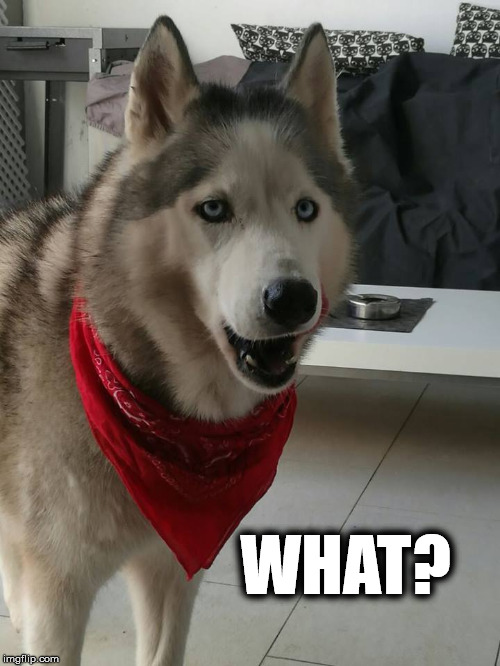 WHAT? | image tagged in wat,dog | made w/ Imgflip meme maker