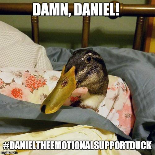 1ckyh1 daniel the duck meme generator imgflip,Duck Meme