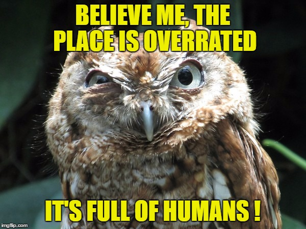 BELIEVE ME, THE PLACE IS OVERRATED IT'S FULL OF HUMANS ! | image tagged in ornery owl | made w/ Imgflip meme maker